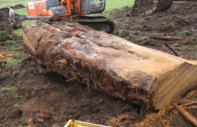 Waikato's Radiocarbon Dating Research